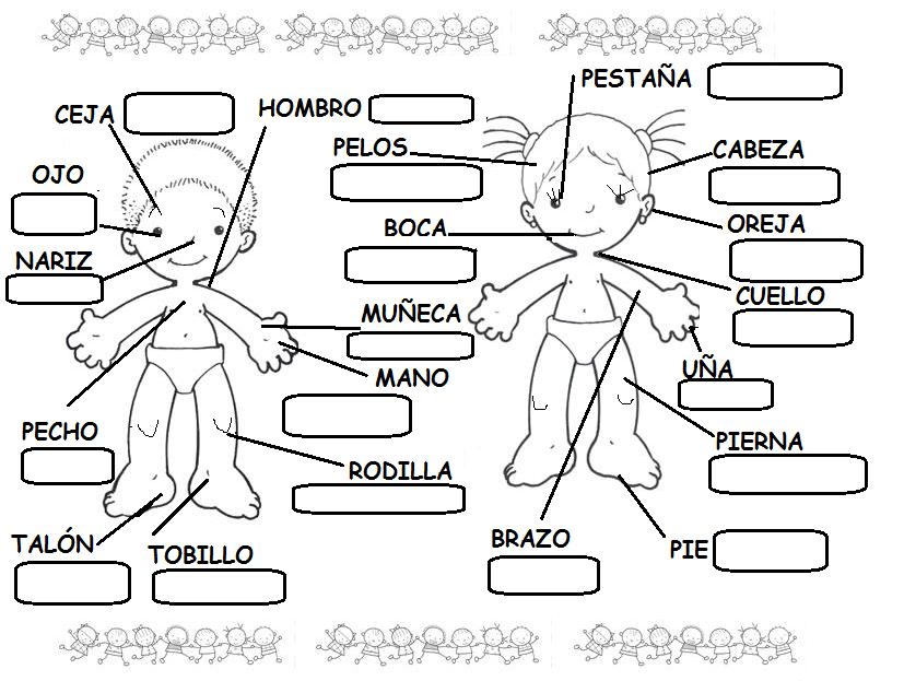 Partes Cuerpo 2º Cuerpo Humano Para Ninos Partes Del Cuerpo Humano Cuerpo Humano