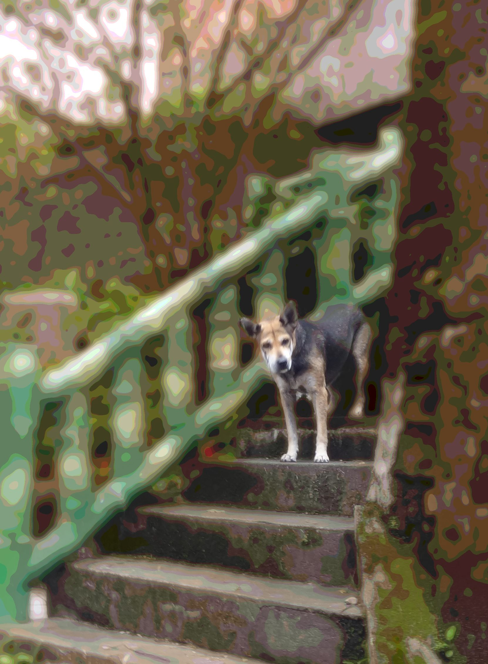 dog on jiufen steps