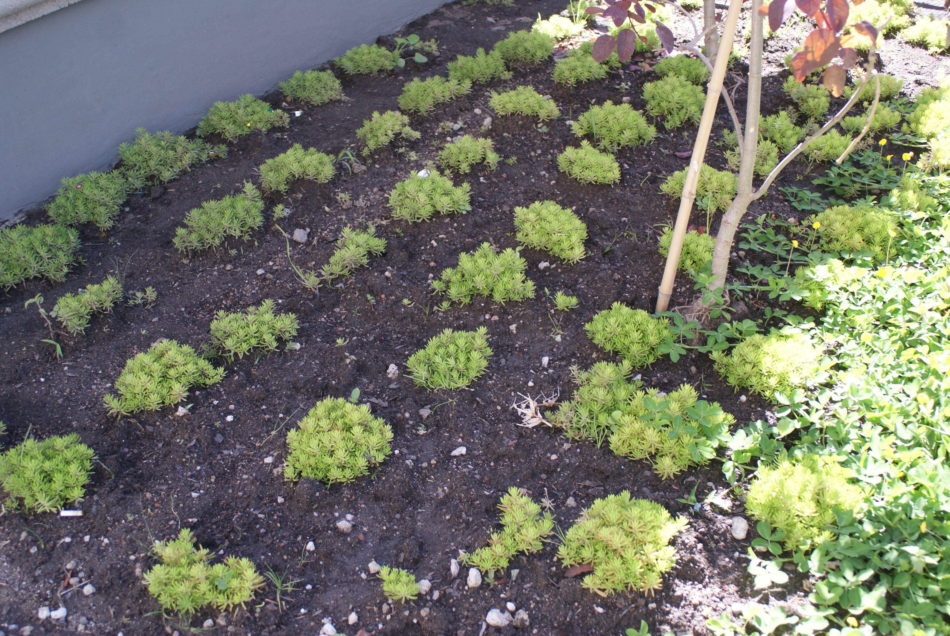 Áreas verdes del proyecto en crecimiento.