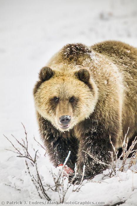 Alaska Tattoo Ideas Bear