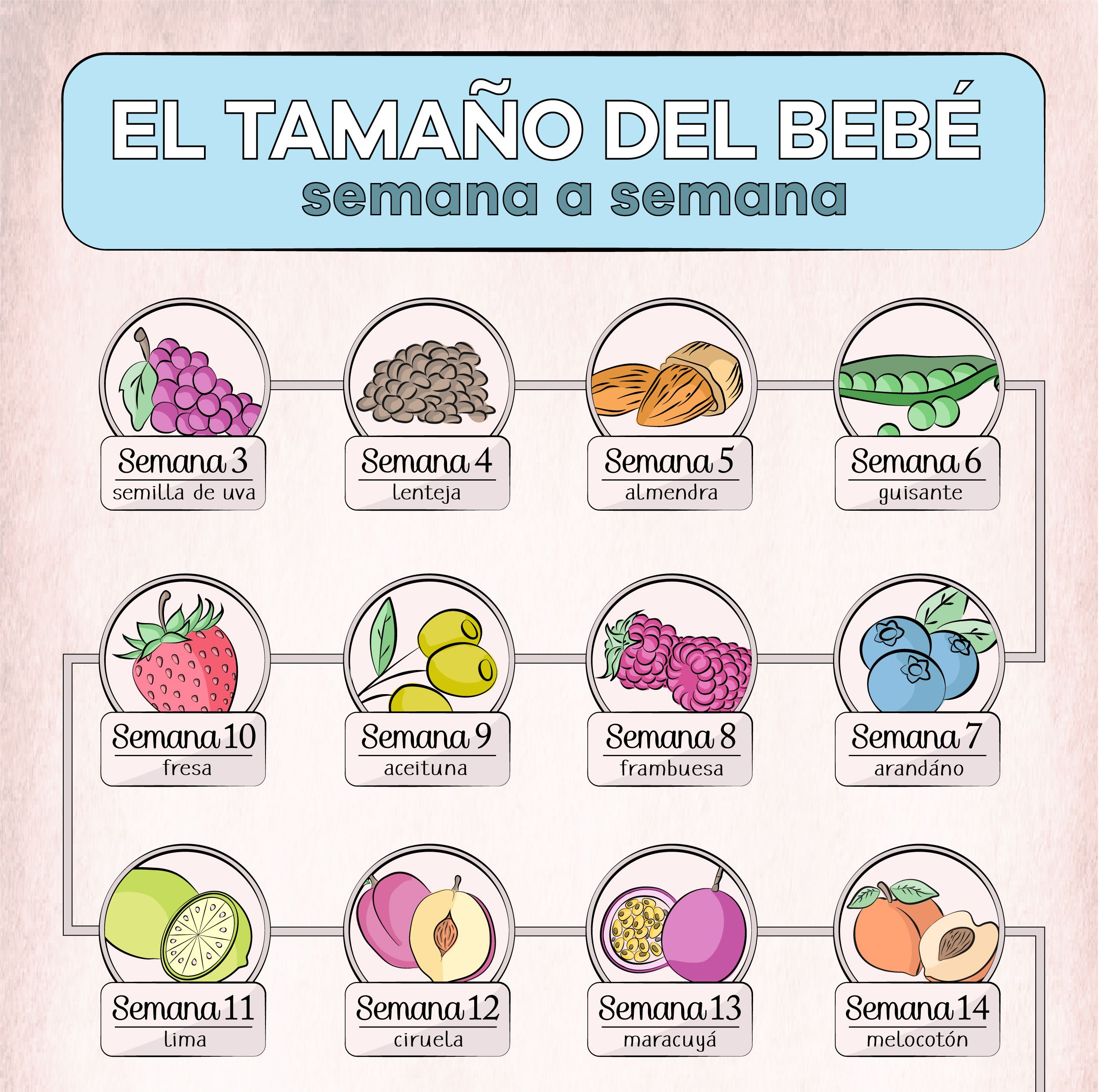 Infografia El Tamano Del Bebe Semana A Semana Contiene Toda La