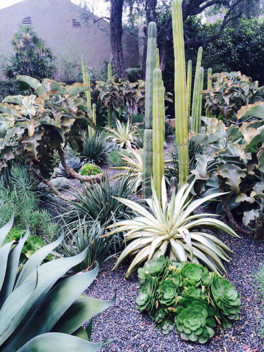 Cactus Jardin De Plantes Grasses