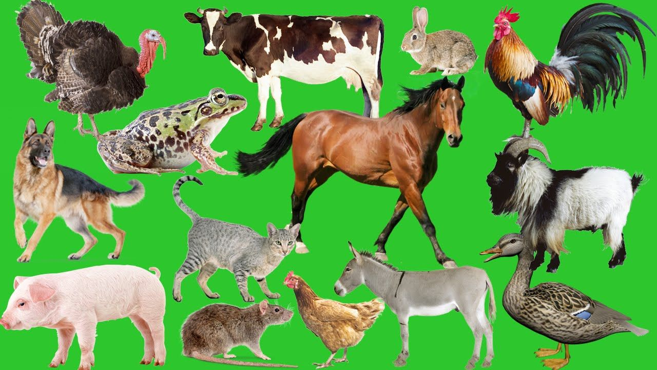 learn farm animals names and sounds with cartoon characters for