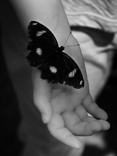 Papillon De Nuit Noir Et Blanc : papillon, blanc, Épinglé, Ligia, Photography(black, White), Beaux, Papillons,, Papillon, Nuit,