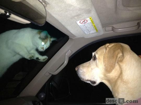 evil cat #humor #woof