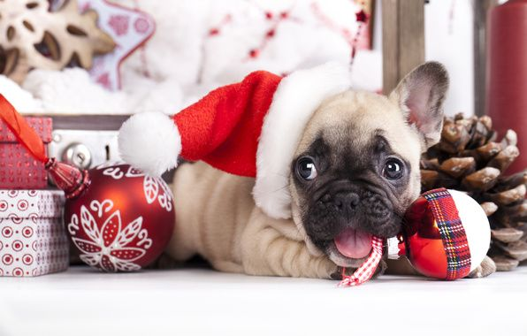 Happy New Year Christmas Puppy Bulldog Merry Christmas In French