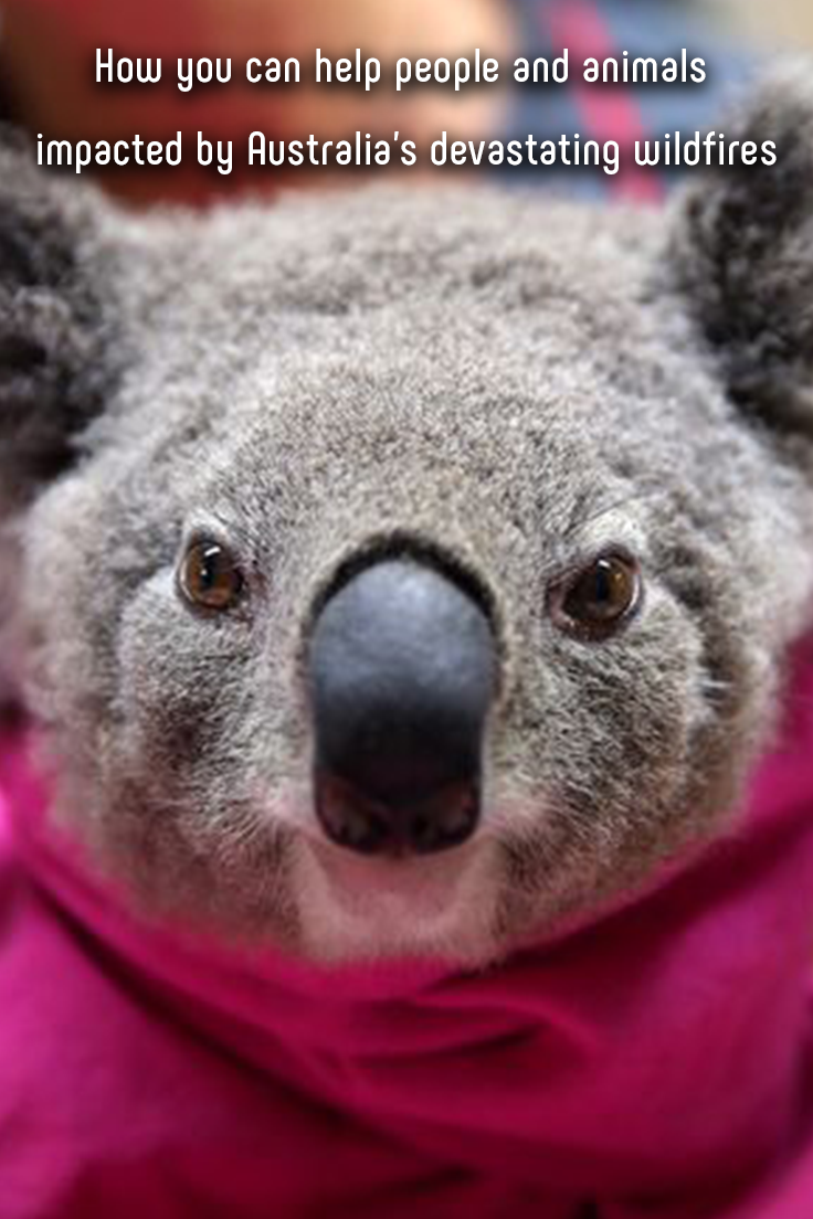 How you can help people and animals impacted by Australia