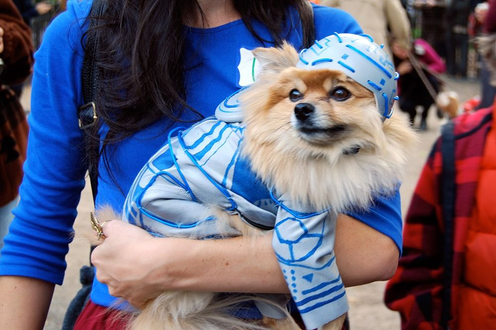 Tron dog costume #pomeranian #halloween | Dogs in Costume