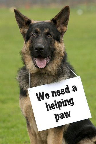 A Helping Paw Military Working Dogs Police Dogs German
