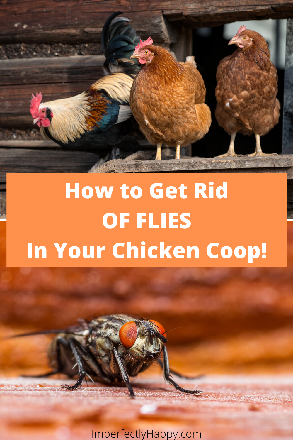 Flies in the Coop How to Get Rid of Them Naturally in 2020 ...