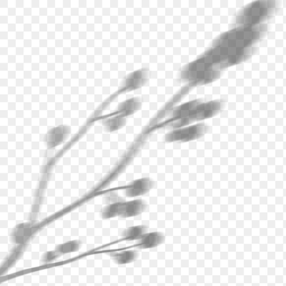 Png Blooming Cotton Branch Shadow Design Element Free Image By Rawpixel Com Minty In 2021 Cotton Branches Design Element Bloom