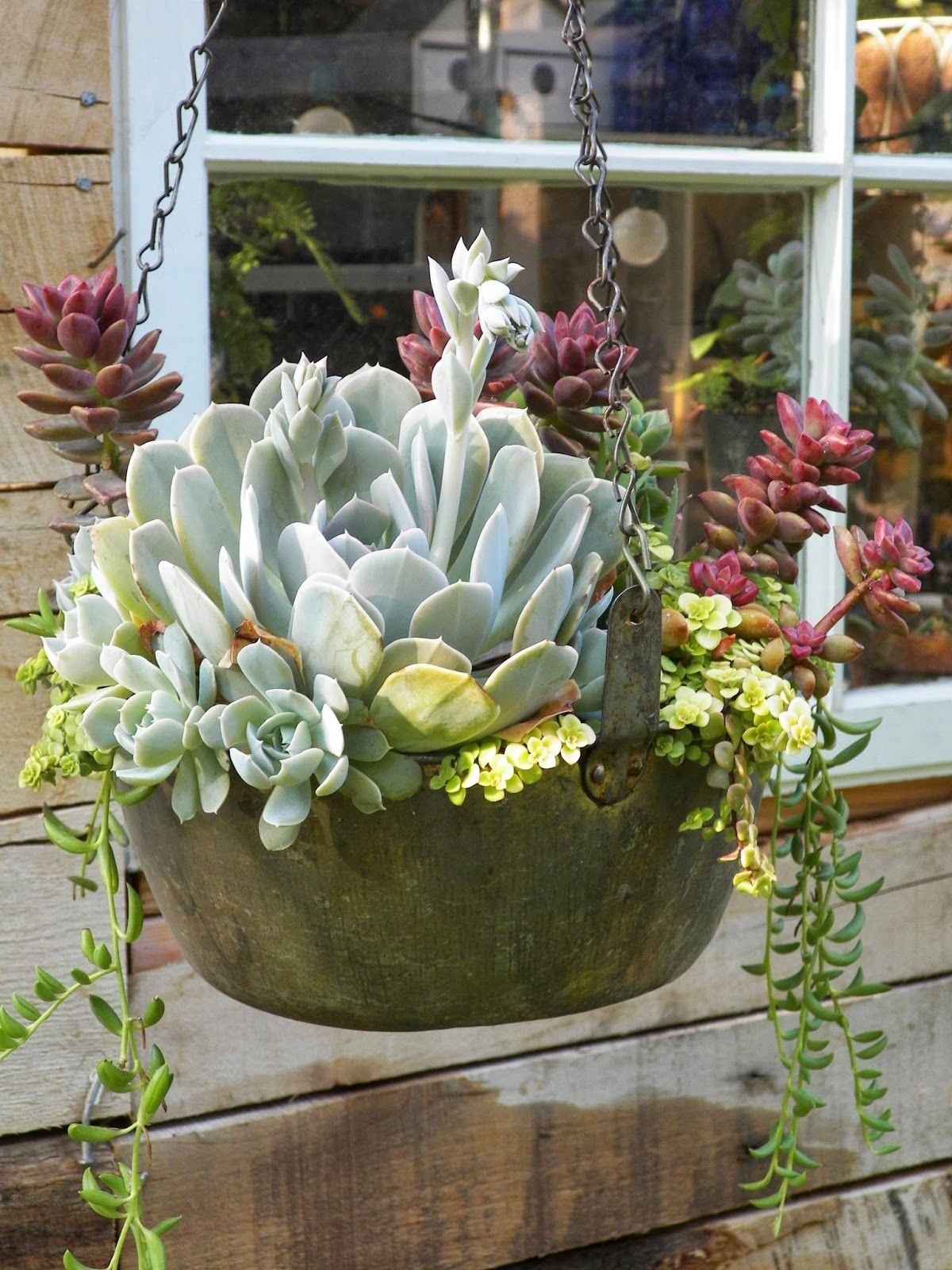#succulents, container garden, gardenjunk, hanging baskets, I Love My Garden: Oh man, I'm so ready.