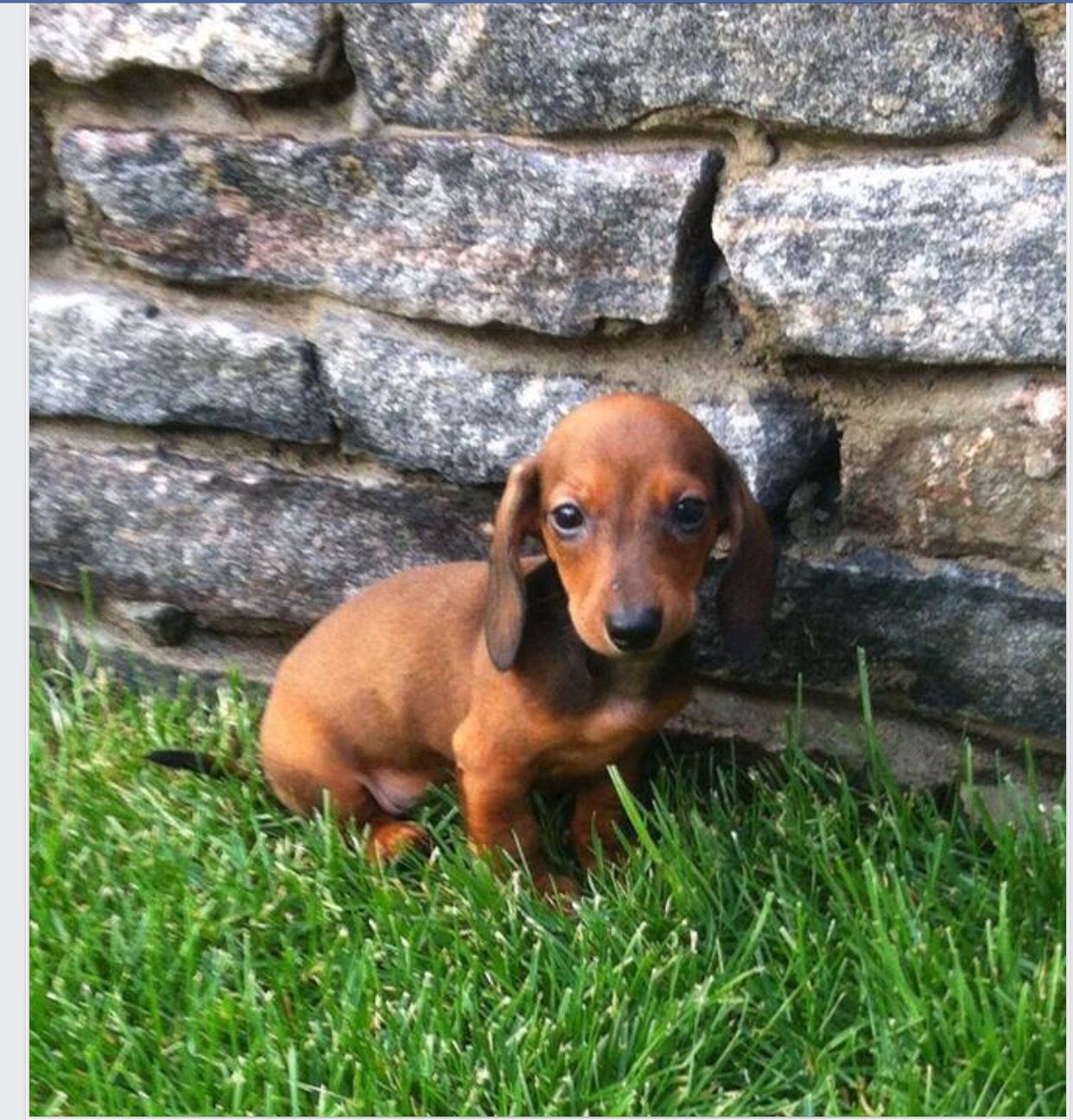 Pin by debbie mitchell janis on dachshunds pinterest dachshunds