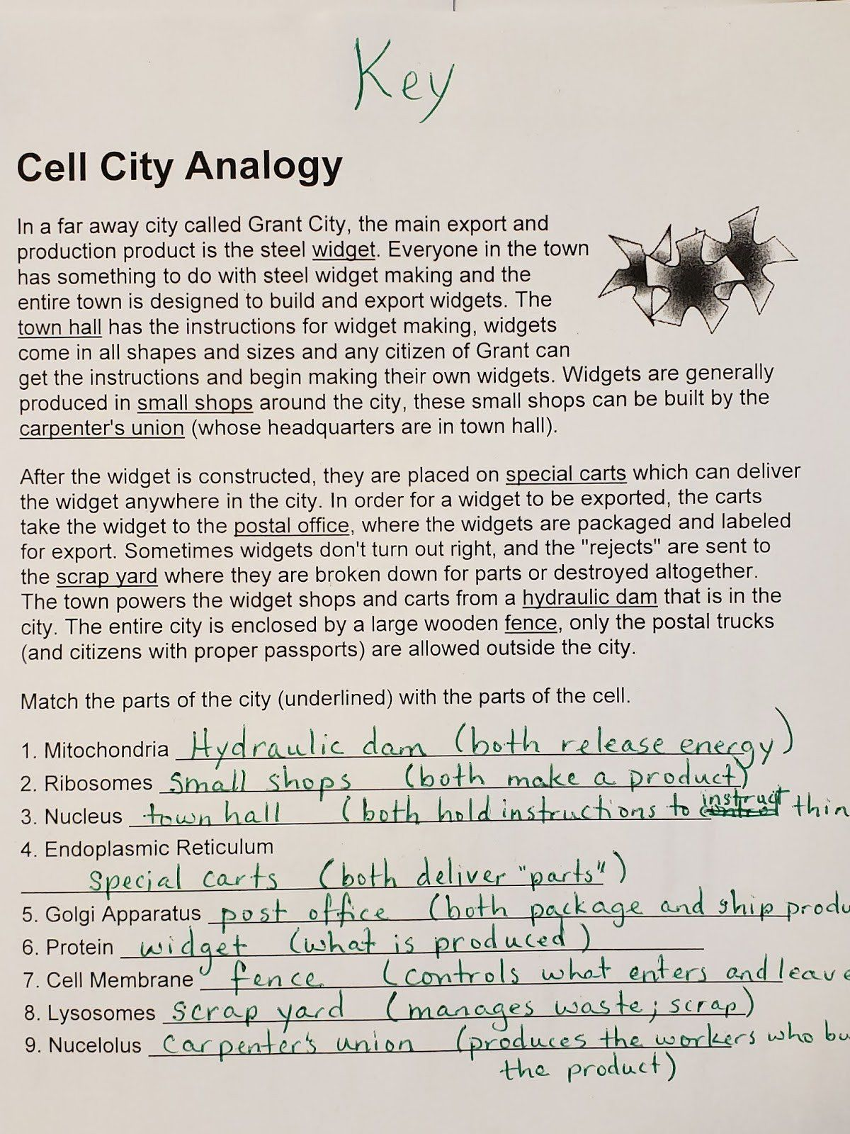 Cell Cityogy Worksheet Mrs Counts 7th Grade Science