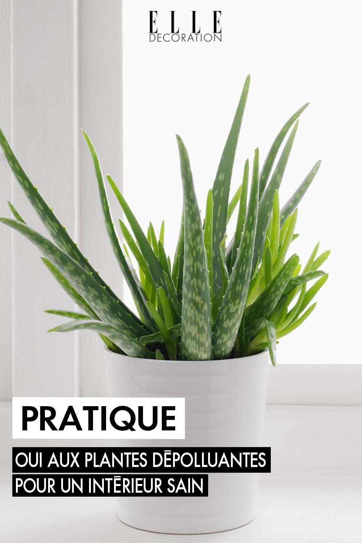 Plantes Depolluantes Les Cinq Plantes Depolluantes Les Plus