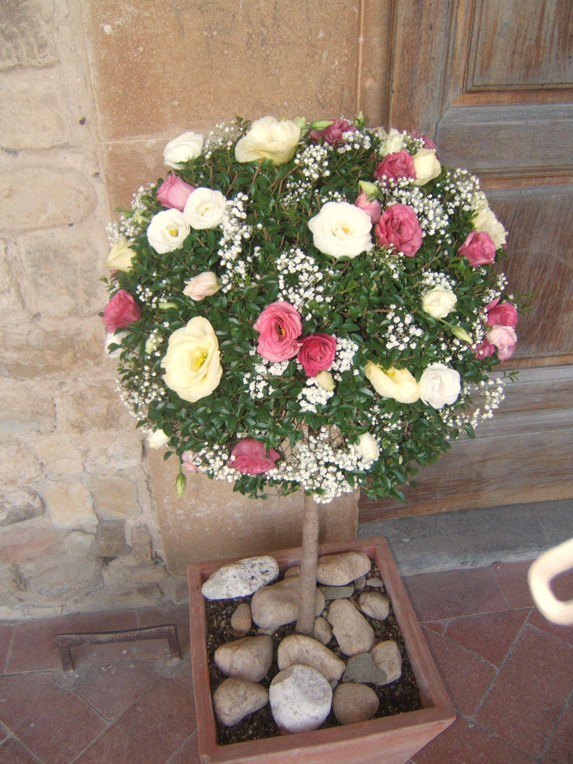 Alberelli per matrimonio esterno chiesa asso di fiori for Alberelli da esterno