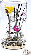 Entspringen Sie in einem Glas oder einem sorgenfreien Terrarium. Eine schöne au…