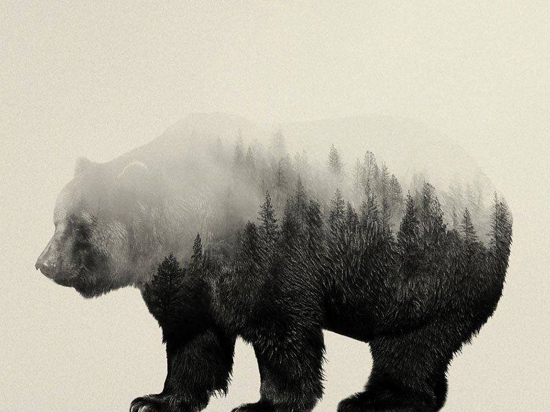 Double Exposure Portraits Of Animals Reflecting Their Habitat By Andreas Lie Creativity Post Double Exposure Portrait Double Exposure Double Exposure Photo