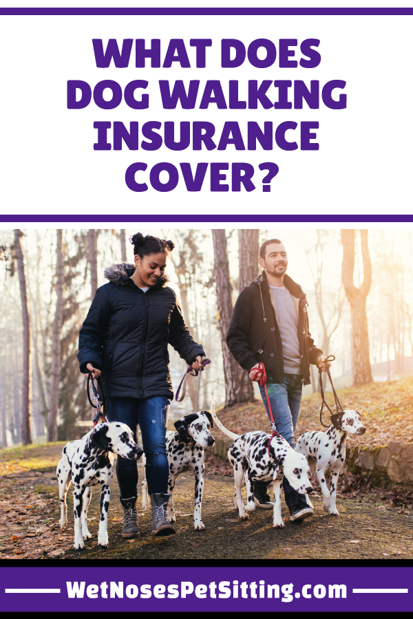 What Does Dog Walking Insurance Cover? Wet Noses Videos
