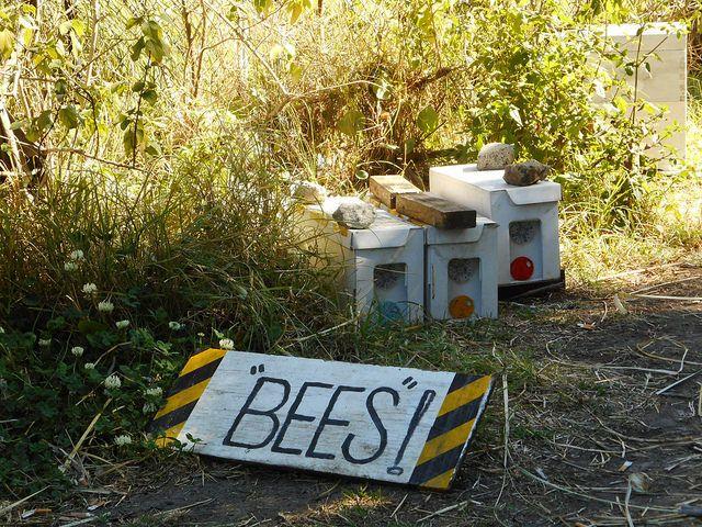Beekeeping for Beginners Review - apiary #beekeeping # ...