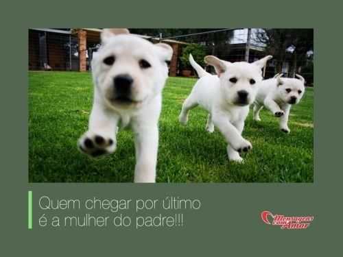 Quem chegar por último é a mulher do padre!!! #dogs #cachorros #cute