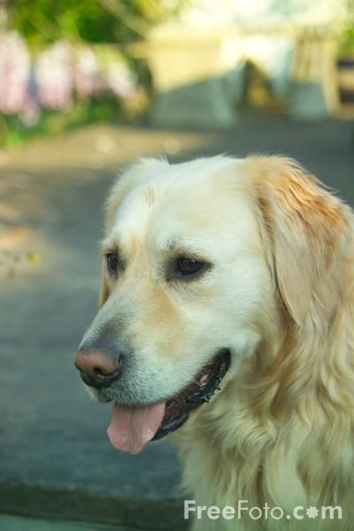 Dog Competitions and Contests, read on all about this for your pup
