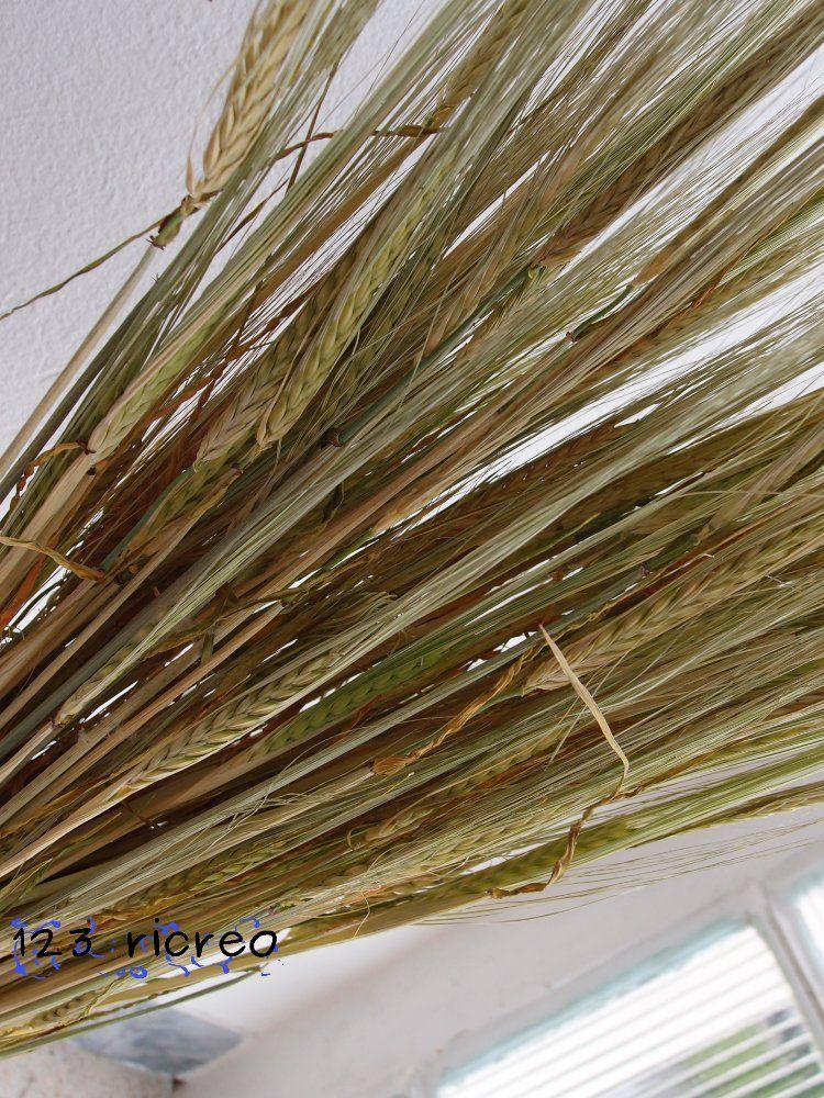 come si fa ad essiccare delle #spighe di #orzo - 123ricreo