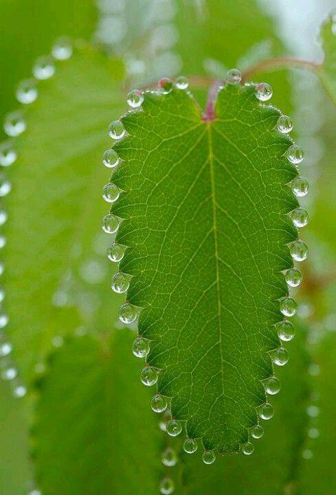 Symmetry Beautiful Nature Mother Nature Amazing Nature