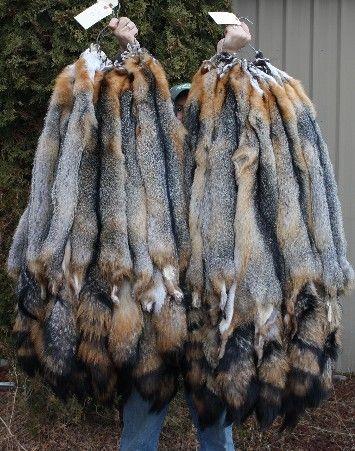 642e6b74d7f Eastern gray fox pelt in 2019