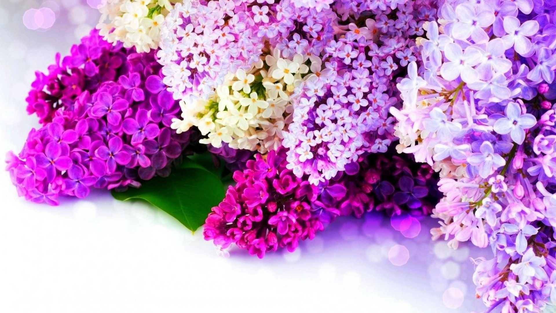 Wallpapers Spring Flowers 2020 Live Wallpaper Hd Flower Wallpaper Lilac Background Spring Flowers