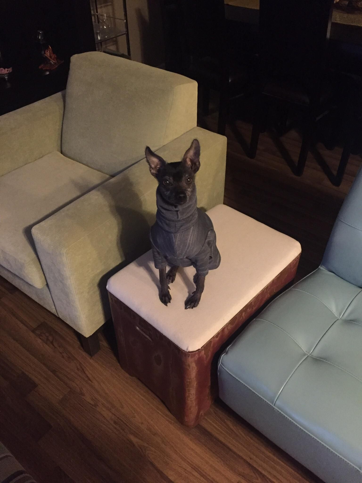 PsBattle: Xolo on bench