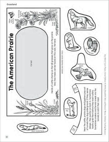 Grassland Double Sided Diorama Animal Habitats Printables