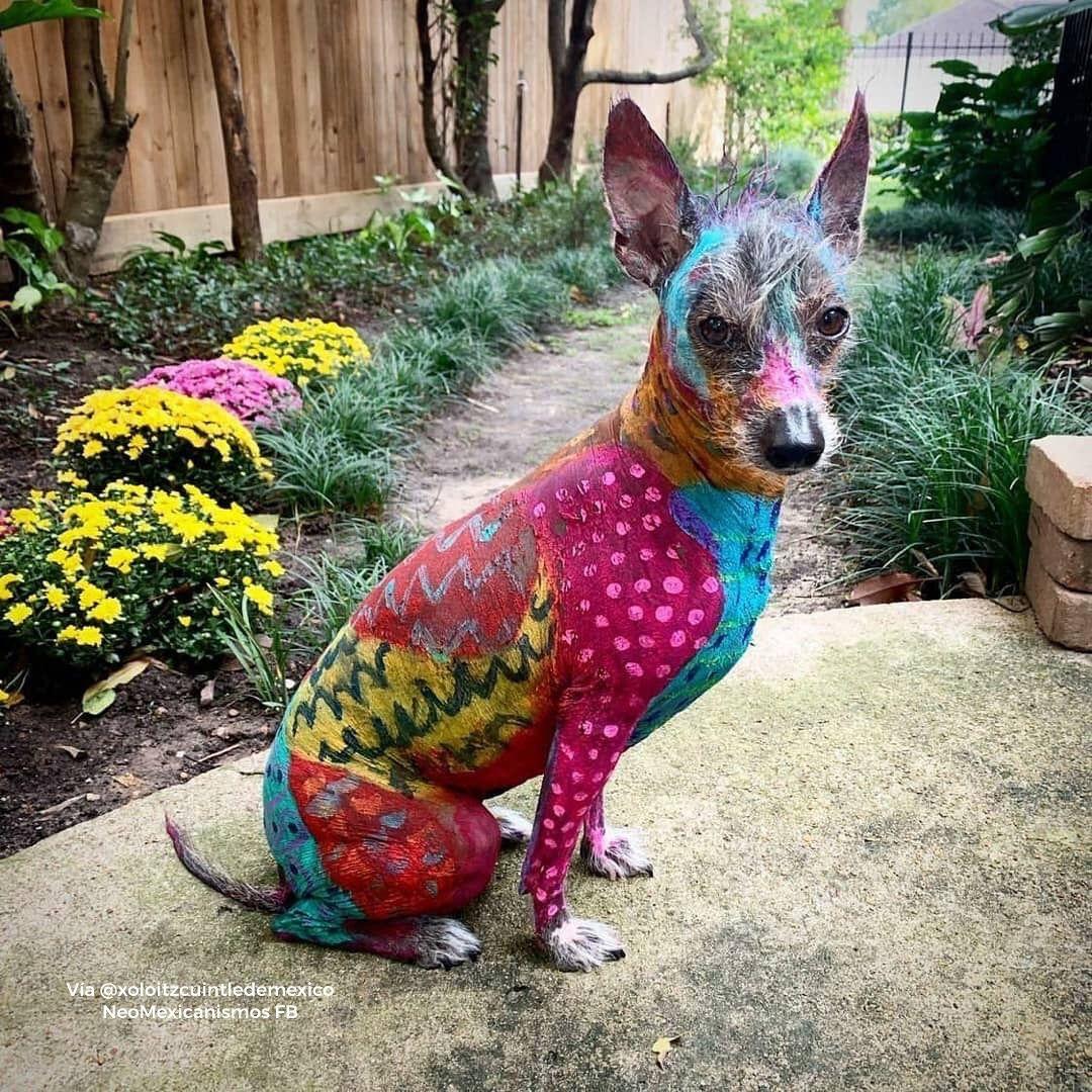 Pin De Heather Armstrong En All Creatures Great Small Perro Xoloitzcuintle Razas De Perros Perros