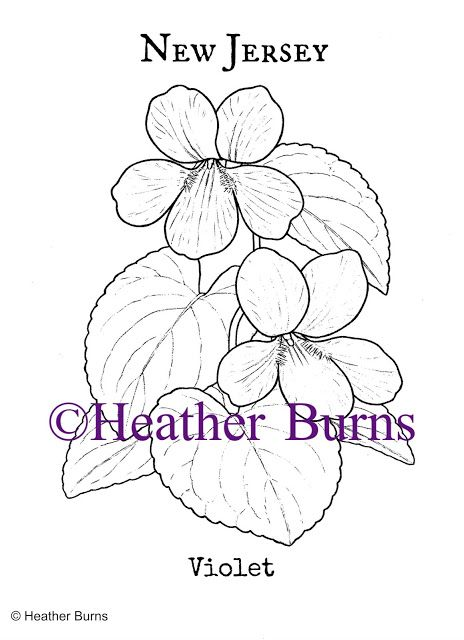 New Jersey State Flower Violet Coloring Books Flower Coloring