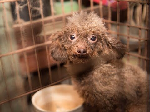 Considering Buying A Dog From A Pet Shop This Rescue Of 140 Sick