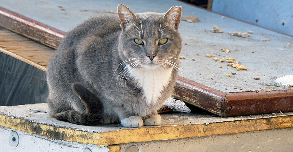 The NYC Feral Cat Initiative supports the efforts of