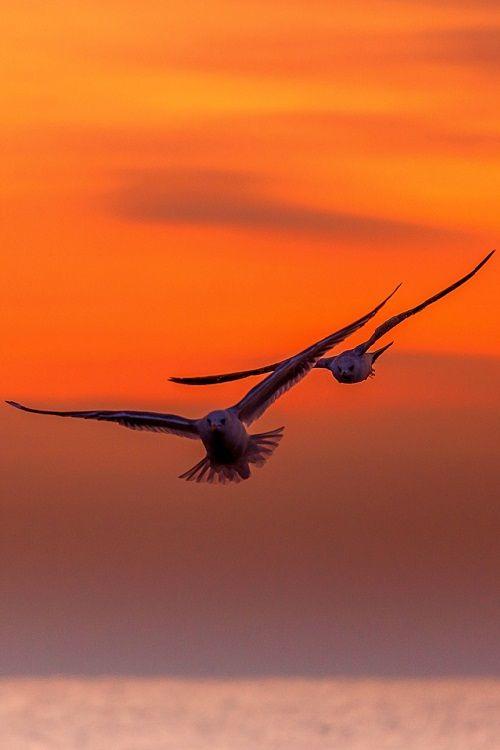 Crazy World Ain T It Aves Volando Gaviotas Volando Aves