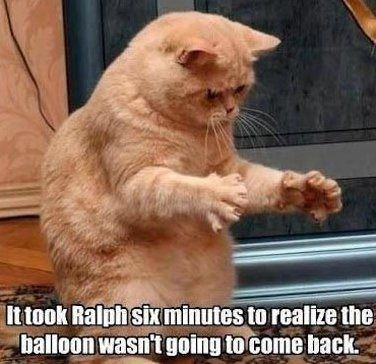 Funny Cat Memes Orange Tabby Cats Tabby Cats And Captions - 20 hilarious cat photos captioned comedians