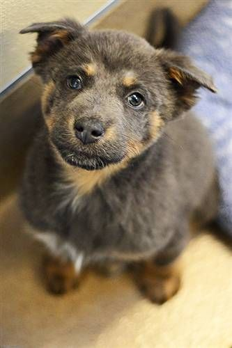 All Adoptable Animals Animal Sanctuary Animals Dog Adoption