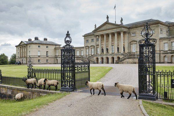 pagewoman: Sheep at Kedleston Hall, Derbyshire, England (via national trust)