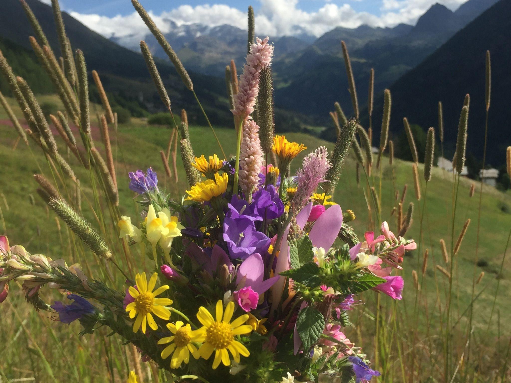 Fiori Da Giardino In Montagna fiori di montagna | composizioni floreali, fiori, floreale