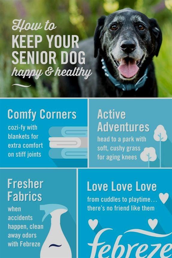 Dog Training Duluth Mn Dog Training Near Me Prices Dog Training