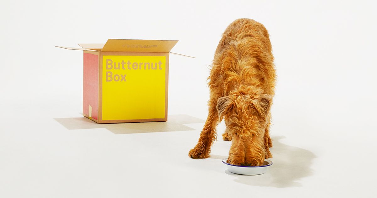 The Worst Dry Dog Foods… (7 Brands to Avoid) Dog food