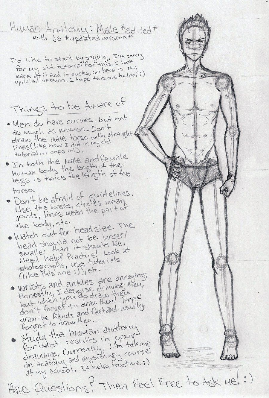 Male Anatomy Tutorial EDITED by shoujoartist.deviantart.com on ...
