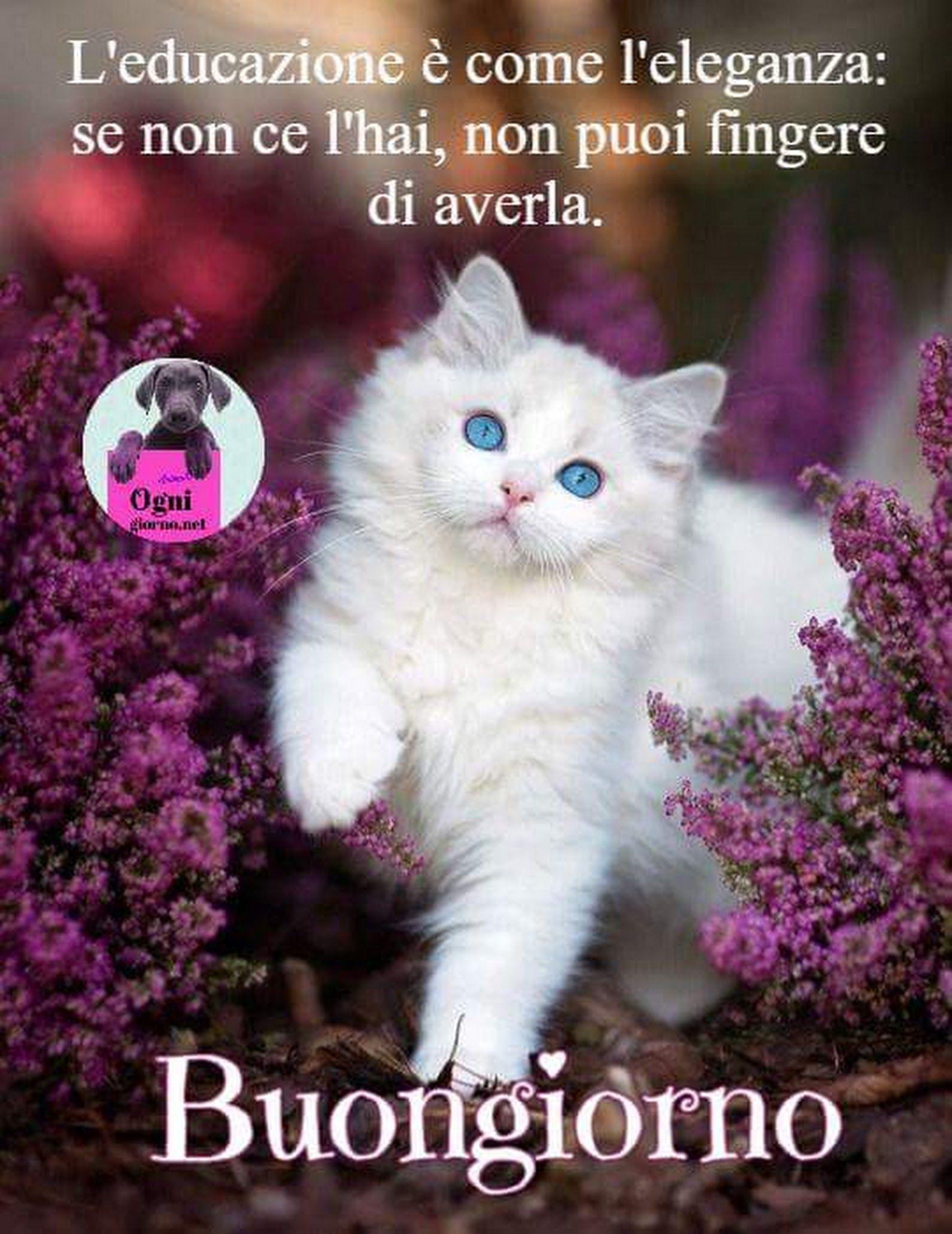 Buongiorno a tutti buon venerdi buongiorno for Buongiorno con gattini