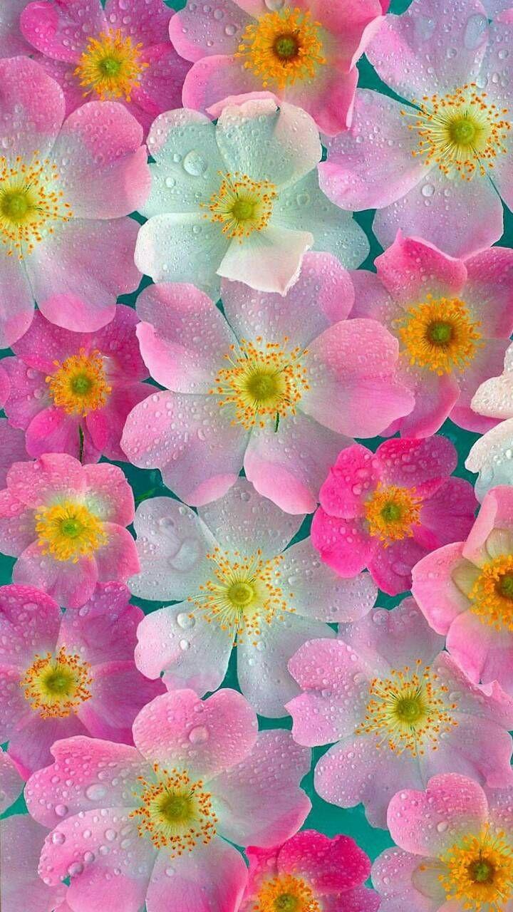 Pink Neon Flowers wallpaper by zzzhelle - 48 - Free on ZEDGE™