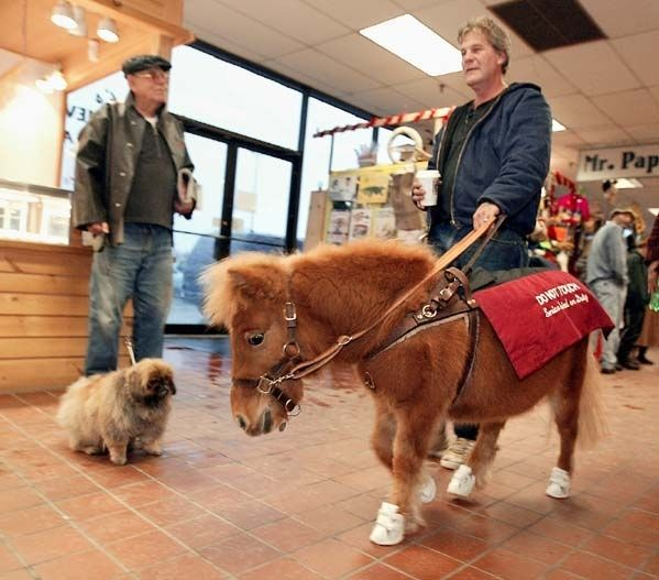 A parapelegic California man is suing GameStop and Marshalls for not letting in the mini-horse that pulled his wheelchair. The government approved mini horses as service animals in March 2011 under the Americans with Disabilities Act