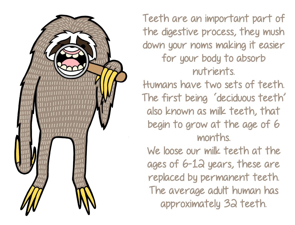 Teeth! | Dental Stuff | Pinterest | Dental humor, Dental assistant ...