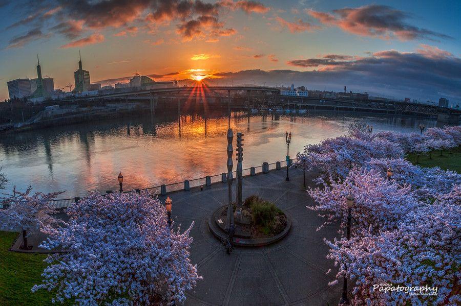 Sunlight on the Sakura by Mitch Schreiber on 500px