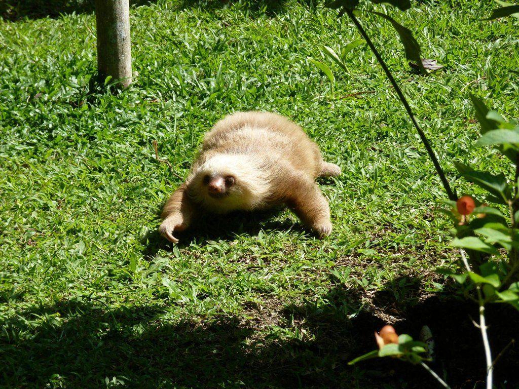 Sloth going to the bathroom - Sloth